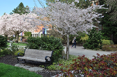 bench in spring on the University of Portland campus